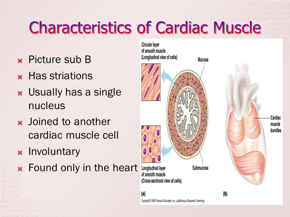 The Muscular System Dr Idara Ppt Download