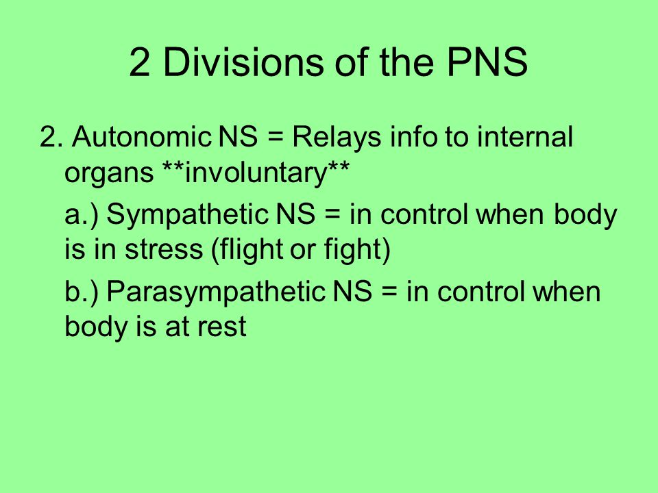 2 Divisions of the PNS 2. Autonomic NS = Relays info to internal organs **involuntary**
