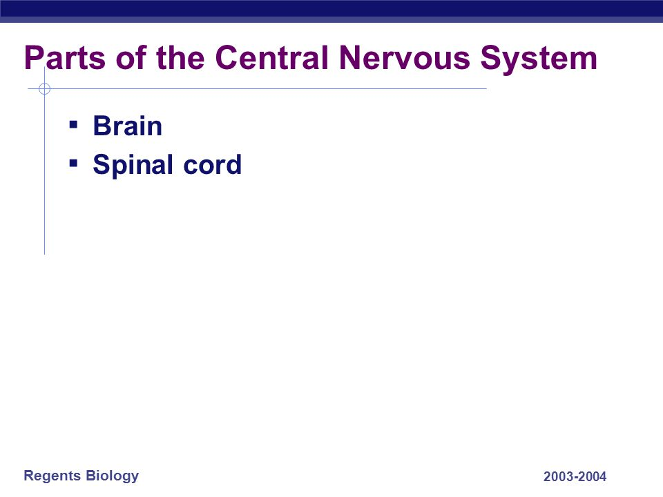 Parts of the Central Nervous System