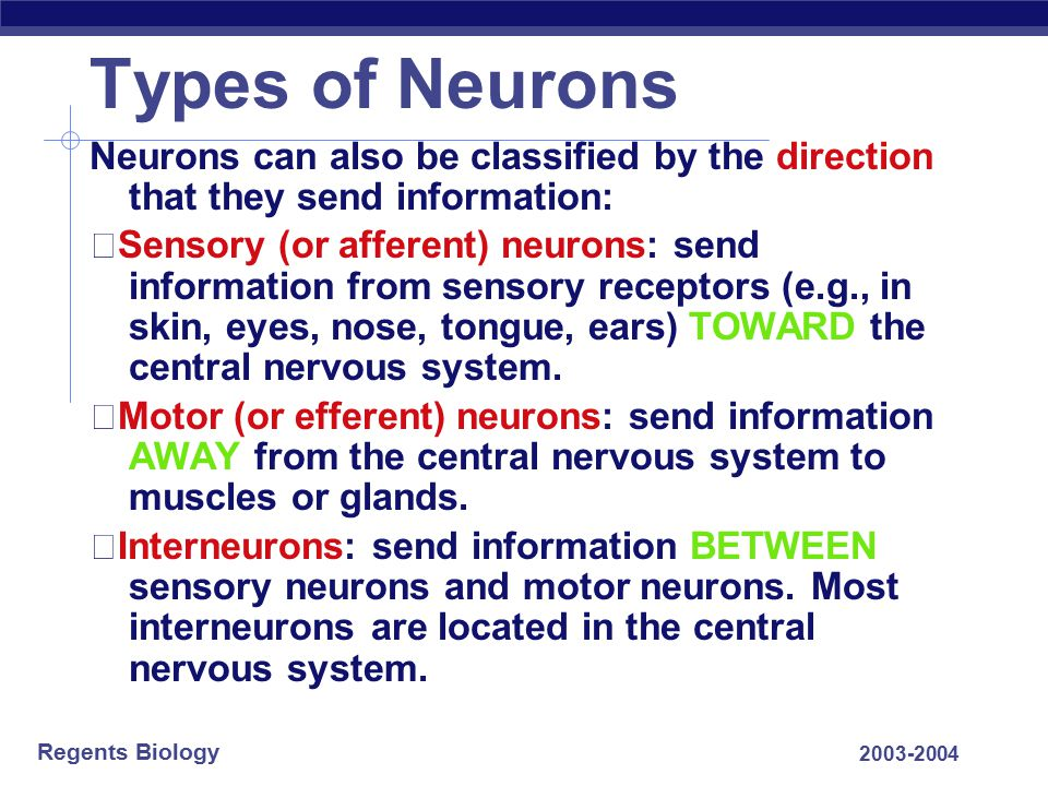 Types of Neurons Neurons can also be classified by the direction that they send information: