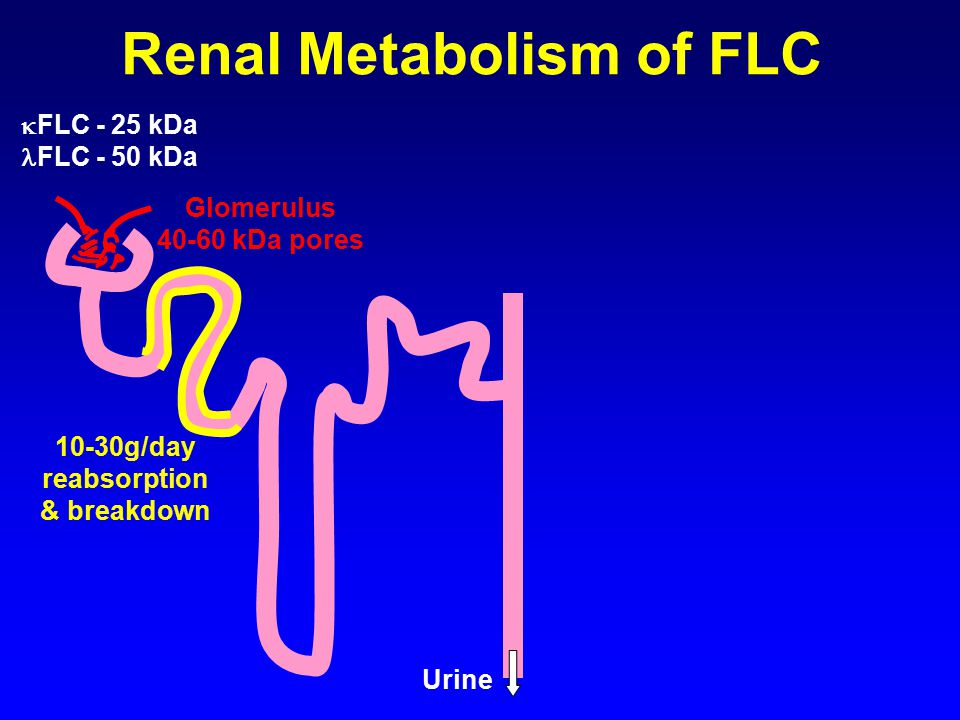 Sensitivity Of Light Chain Analysis Techniques. 5 Renal Metabolism ...