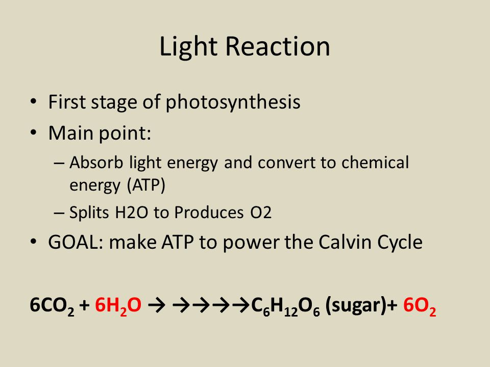 6 1 Notes Light Reactions Ppt Video Online Download