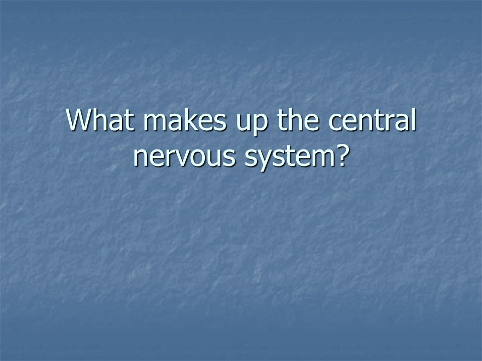 What makes up the central nervous system