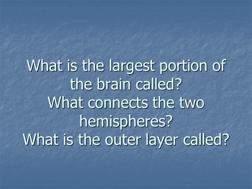 What is the largest portion of the brain called