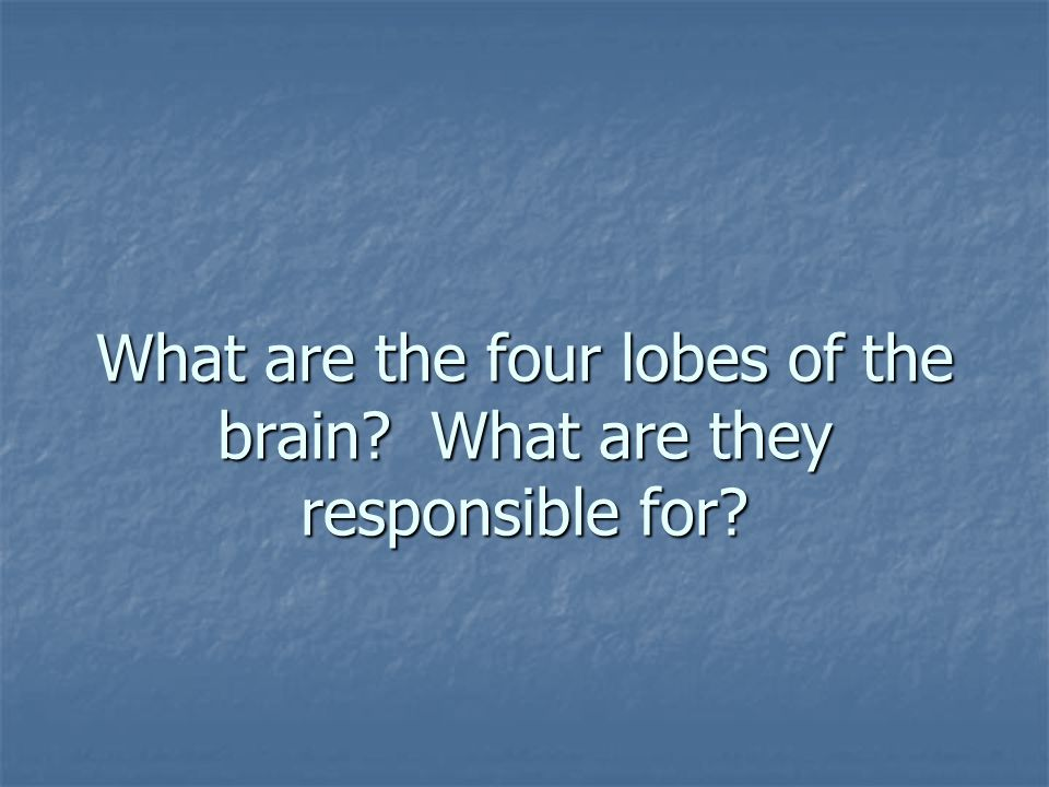 What are the four lobes of the brain What are they responsible for