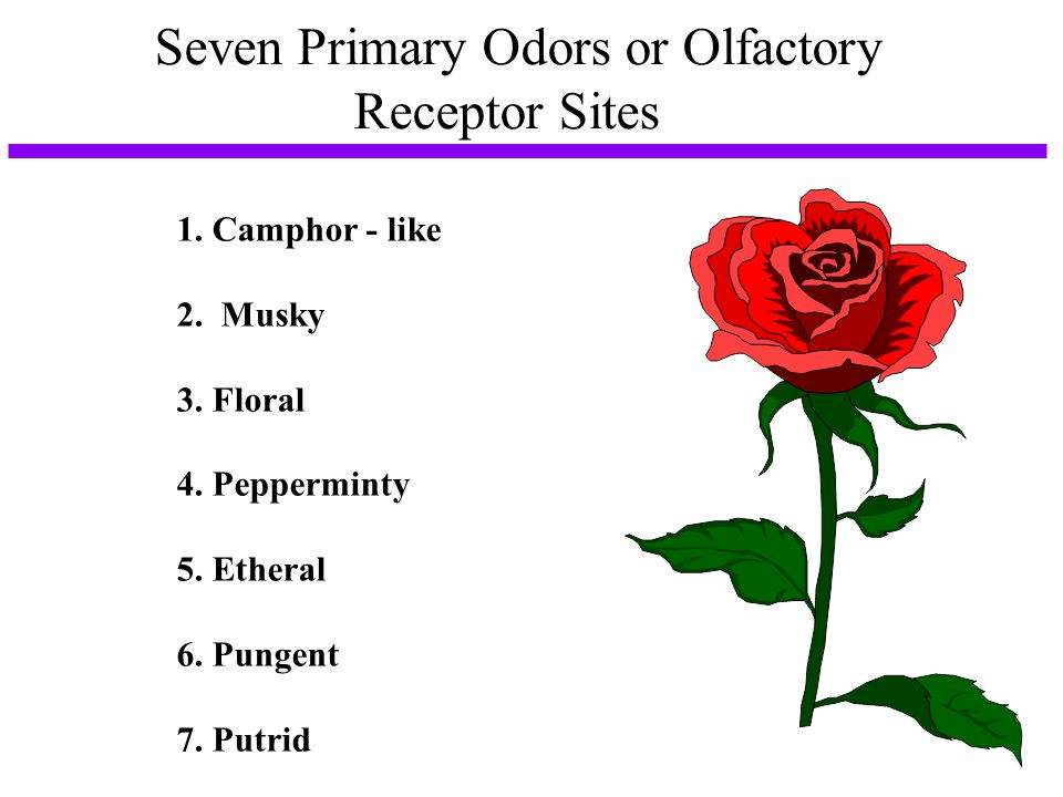 Seven Primary Odors or Olfactory Receptor Sites
