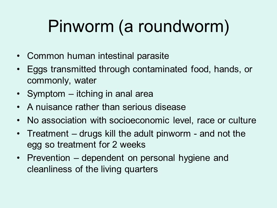 Segmented Worms Earthworm - ppt download