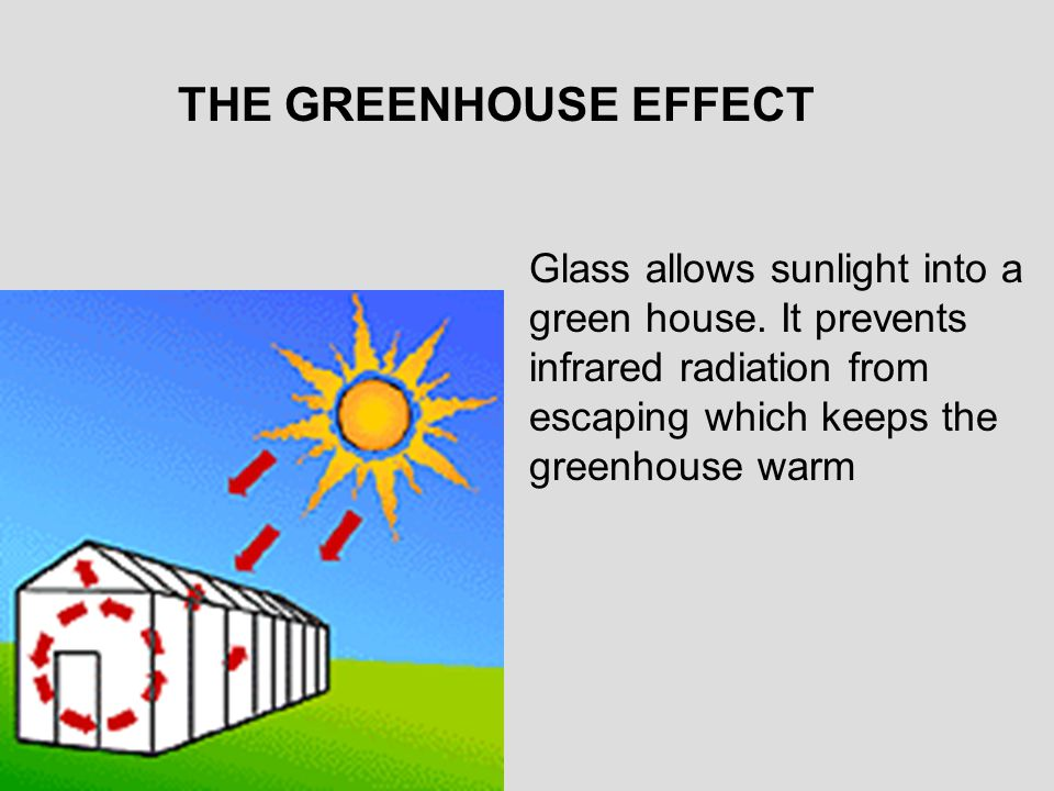 THE GREENHOUSE EFFECT Glass allows sunlight into a green house.