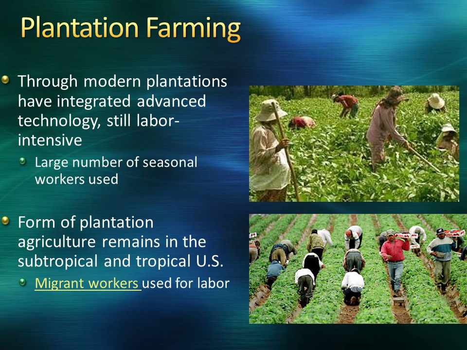 Agriculture Commercial Farming Ppt Video Online Download