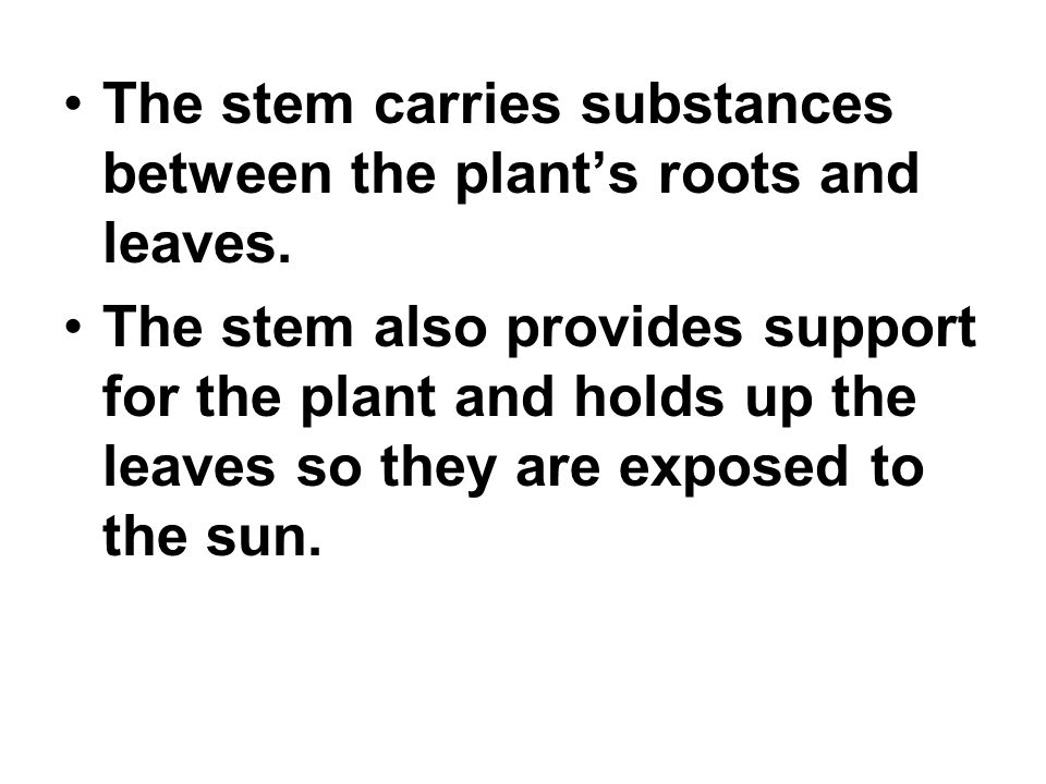 The stem carries substances between the plant's roots and leaves.