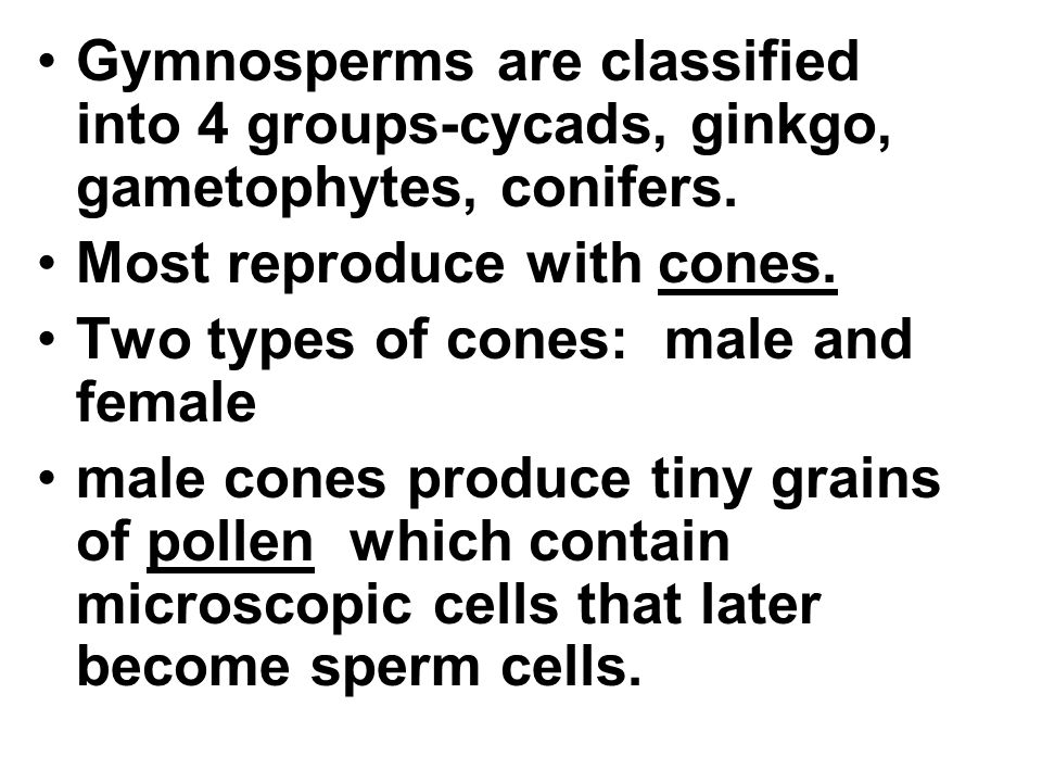 Gymnosperms are classified into 4 groups-cycads, ginkgo, gametophytes, conifers.