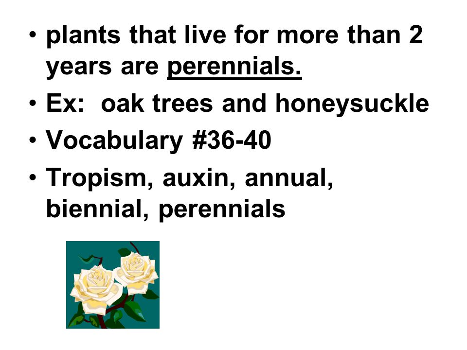 plants that live for more than 2 years are perennials.