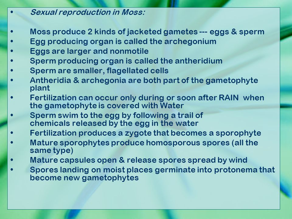 Sexual reproduction in Moss: