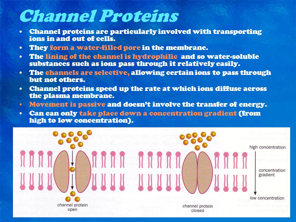 Channel Proteins Channel proteins are particularly involved with transporting ions in and out of cells.