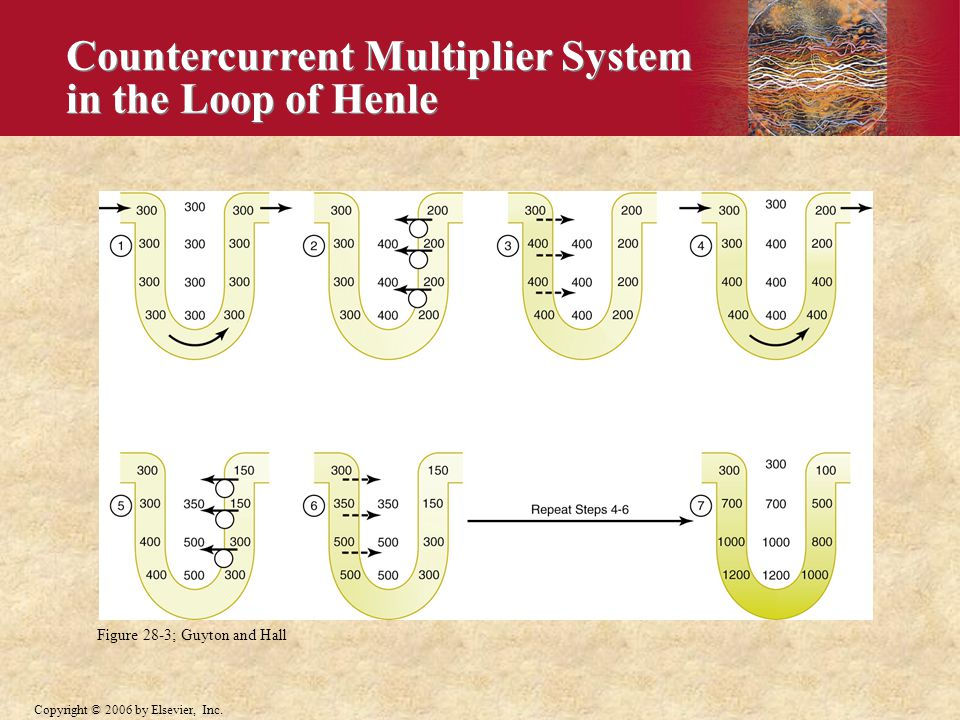Countercurrent Multiplier System in the Loop of Henle