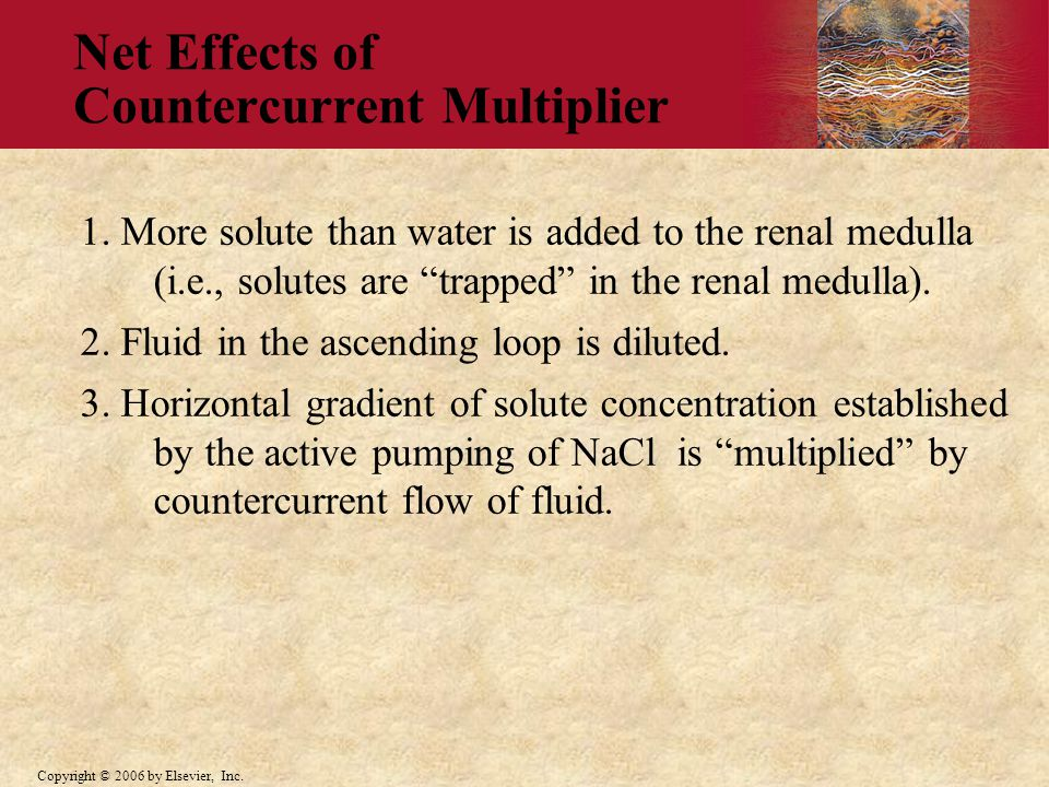 Net Effects of Countercurrent Multiplier