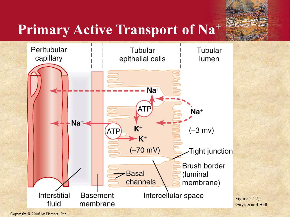 Primary Active Transport of Na+