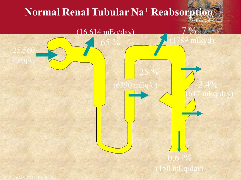 Normal Renal Tubular Na+ Reabsorption