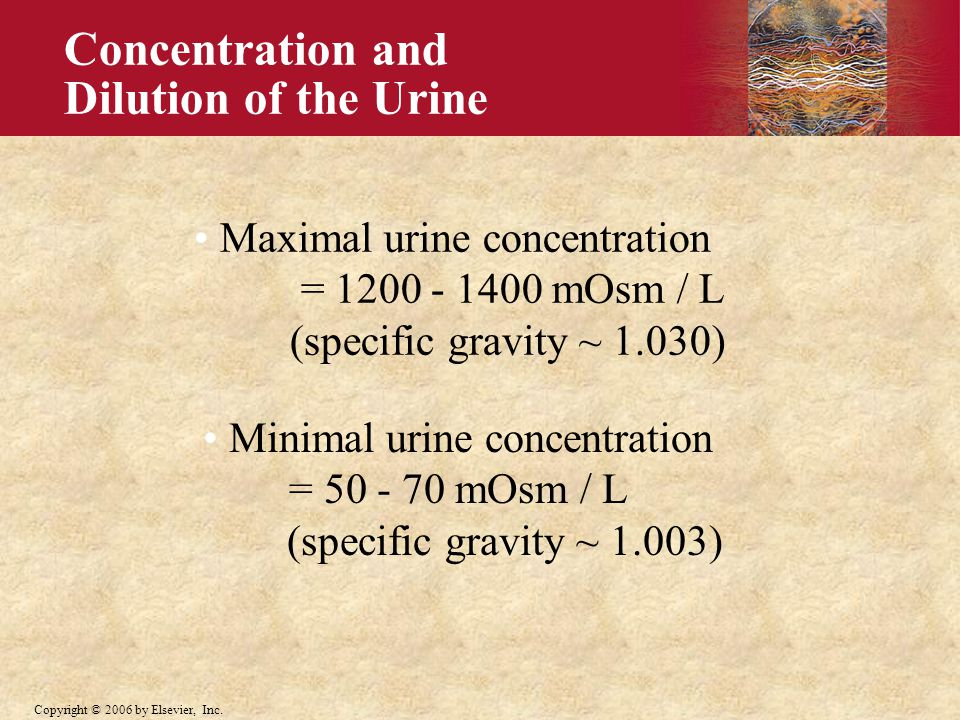 Minimal urine concentration