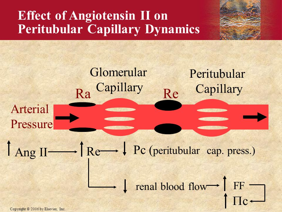 Ra Re Effect of Angiotensin II on Peritubular Capillary Dynamics