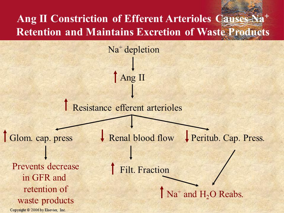 Ang II Constriction of Efferent Arterioles Causes Na+ Retention and Maintains Excretion of Waste Products