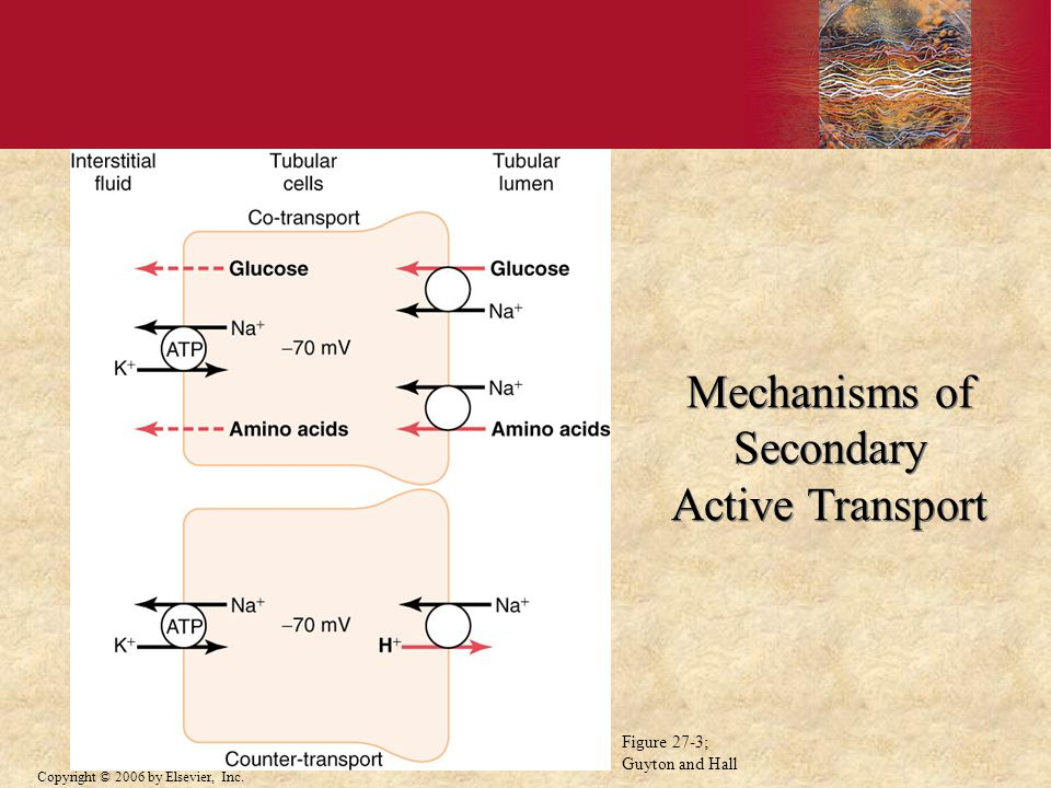 Mechanisms of Secondary Active Transport