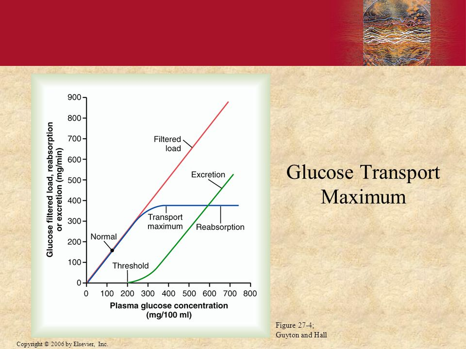 Glucose Transport Maximum