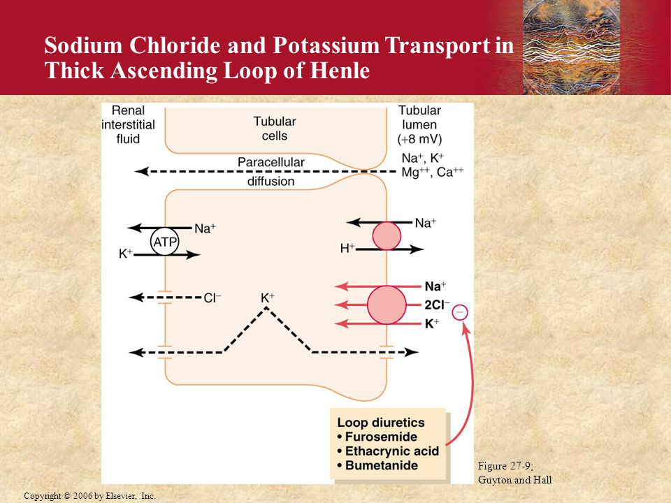 Sodium Chloride and Potassium Transport in Thick Ascending Loop of Henle