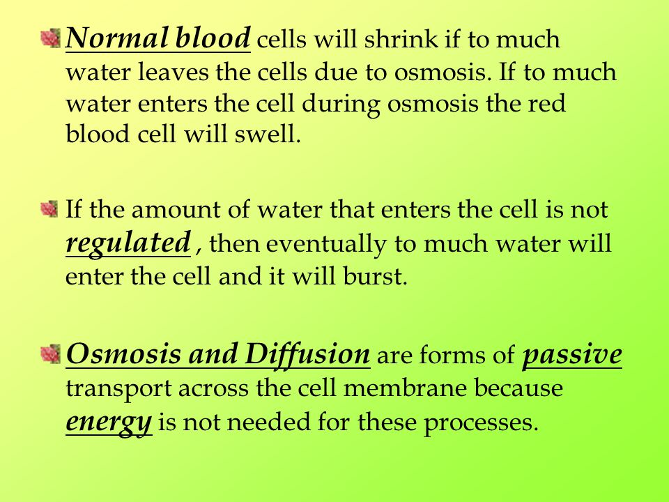 Normal blood cells will shrink if to much water leaves the cells due to osmosis. If to much water enters the cell during osmosis the red blood cell will swell.