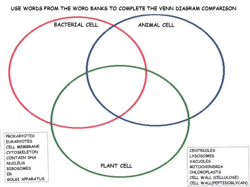 cells cell organelles ppt video online download rh slideplayer com plant cell vs animal cell venn diagram animal plant bacterial cell venn diagram