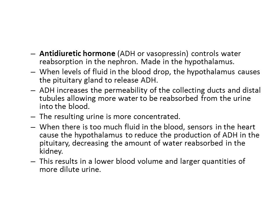 Antidiuretic hormone (ADH or vasopressin) controls water reabsorption in the nephron. Made in the hypothalamus.