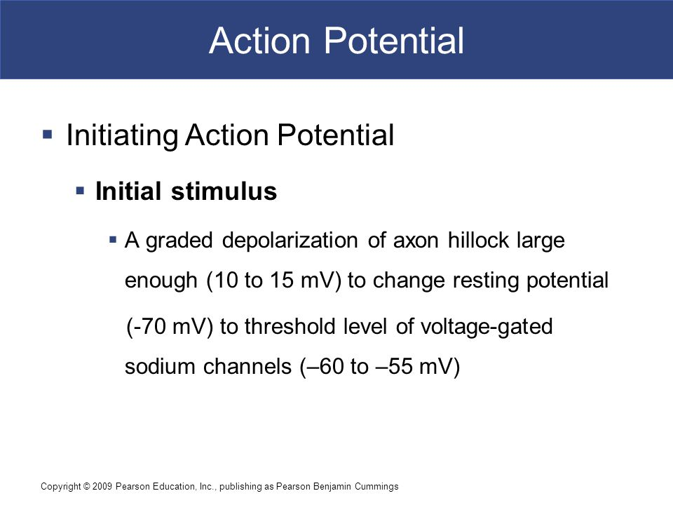 Action Potential Initiating Action Potential Initial stimulus
