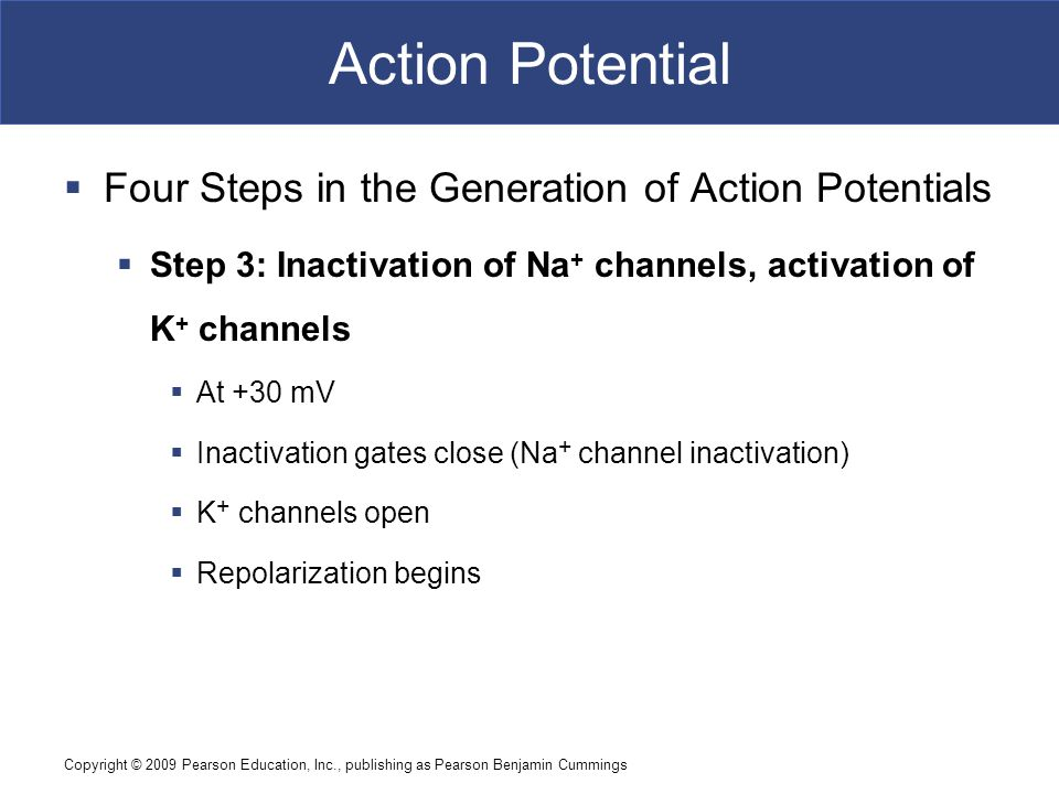 Action Potential Four Steps in the Generation of Action Potentials
