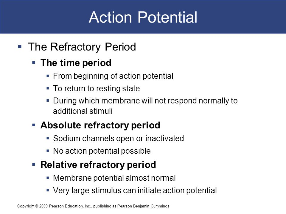 Action Potential The Refractory Period The time period