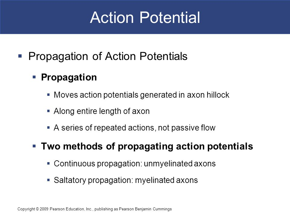 Action Potential Propagation of Action Potentials Propagation