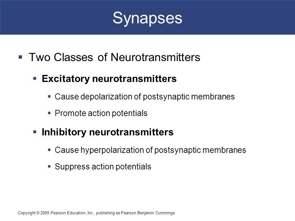 Synapses Two Classes of Neurotransmitters Excitatory neurotransmitters