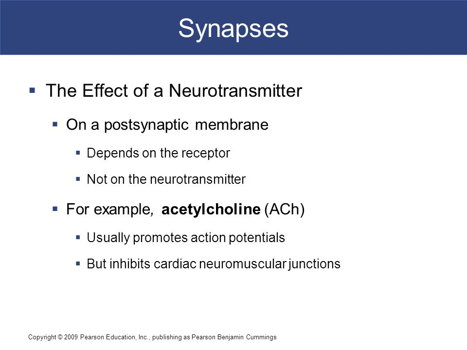 Synapses The Effect of a Neurotransmitter On a postsynaptic membrane