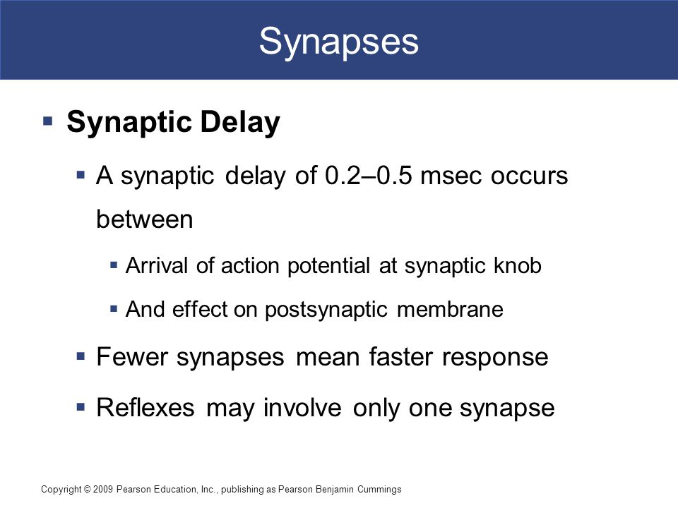 Synapses Synaptic Delay