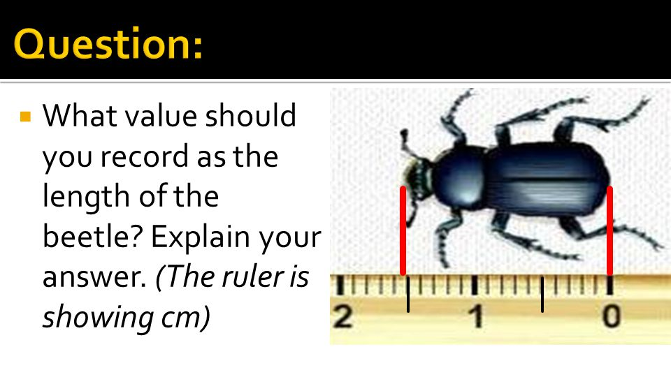 Question: What value should you record as the length of the beetle.