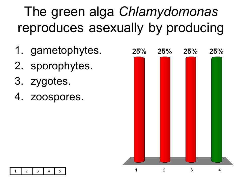 The green alga chlamydomonas reproduces asexually by forming