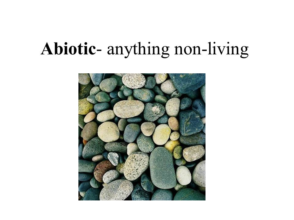 Abiotic- anything non-living