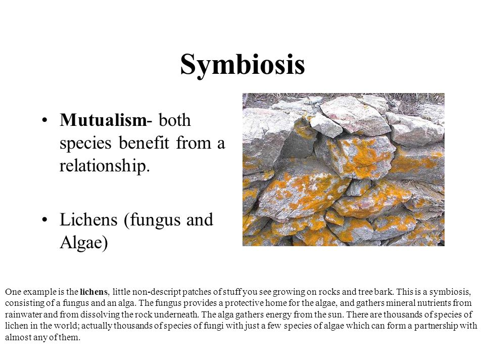 Symbiosis Mutualism- both species benefit from a relationship.