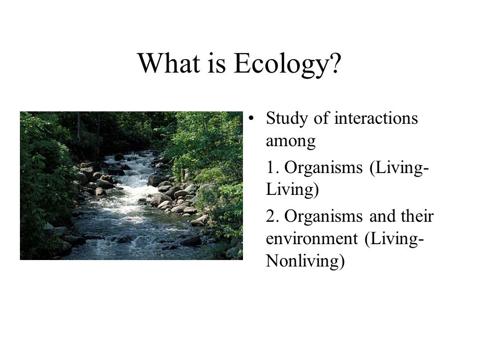 What is Ecology Study of interactions among