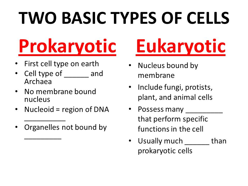 what are the two main types of cells