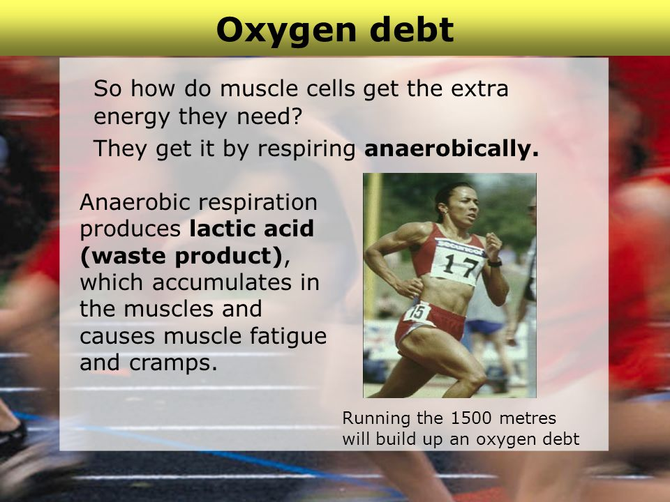 Oxygen debt So how do muscle cells get the extra energy they need