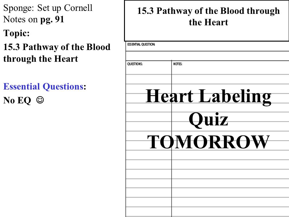 Heart labeling quiz tomorrow ppt download heart labeling quiz tomorrow ccuart Images