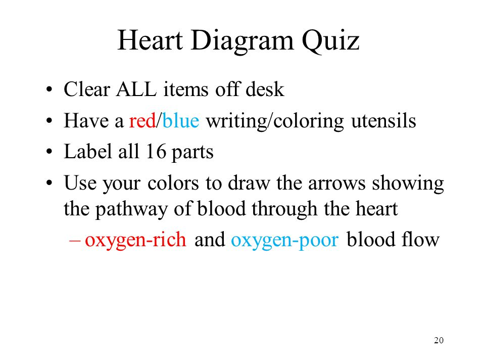 Heart Labeling Quiz Tomorrow Ppt Download
