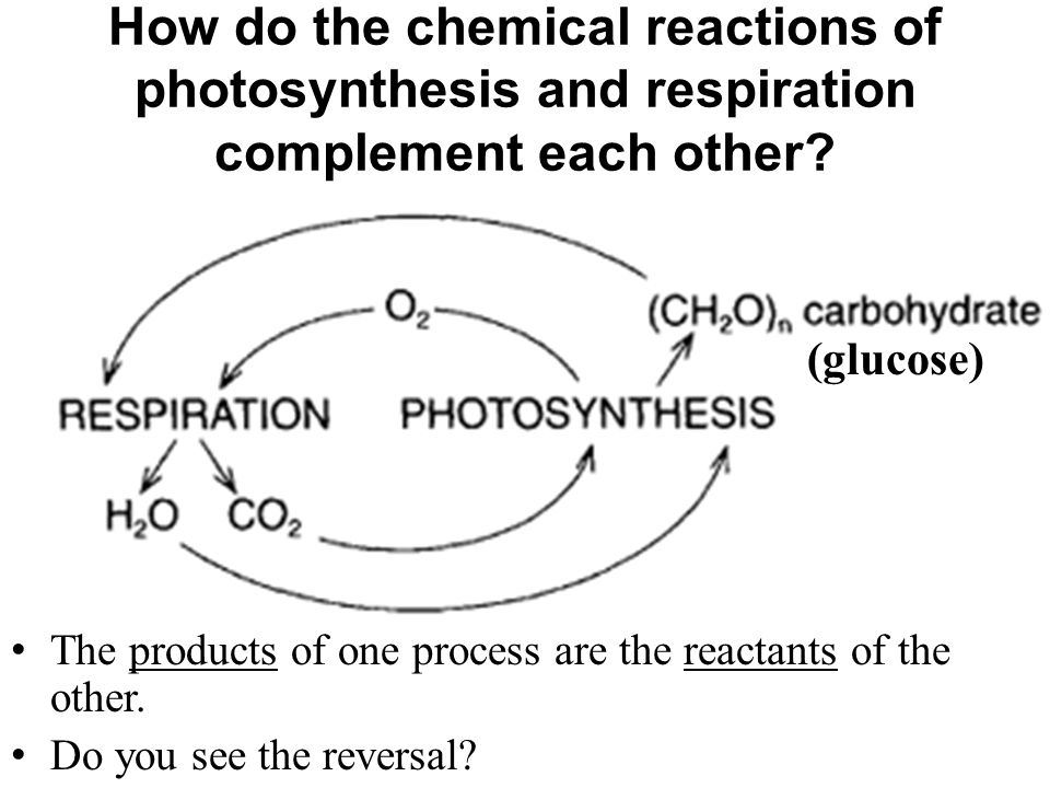 How do the chemical reactions of photosynthesis and respiration complement each other