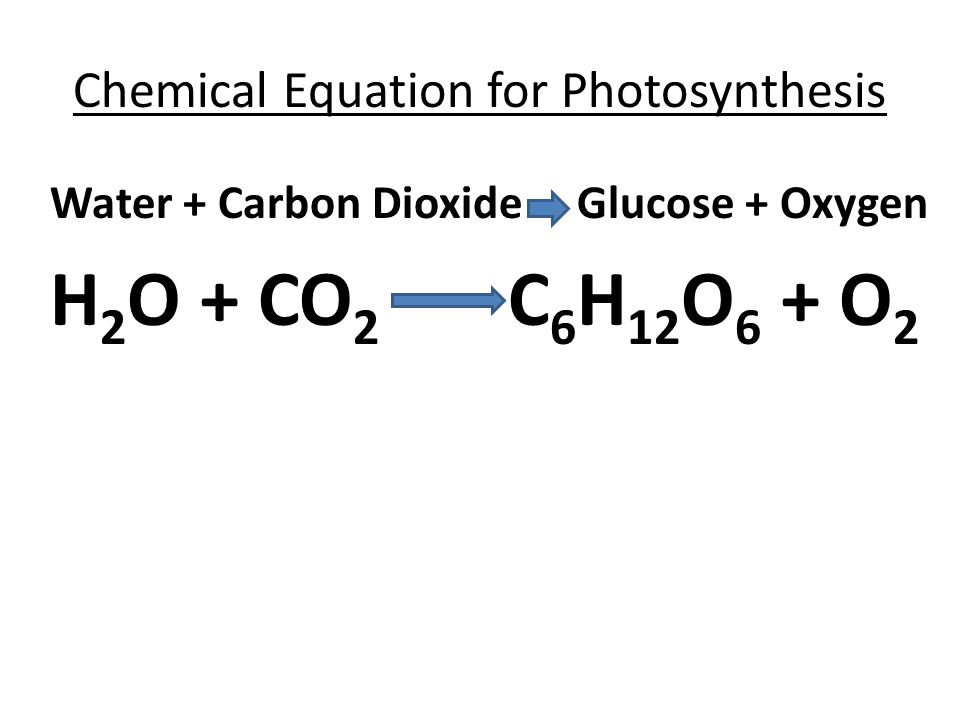 Exam 4 review test tomorrow ppt video online download chemical equation for photosynthesis ccuart Gallery