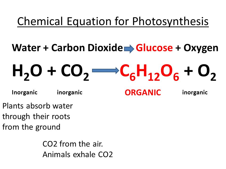 equation for photosythesis Here is the chemical equation for the photosynthesis process  the box on the left side of the photosynthesis and cellular respiration sheet 7.